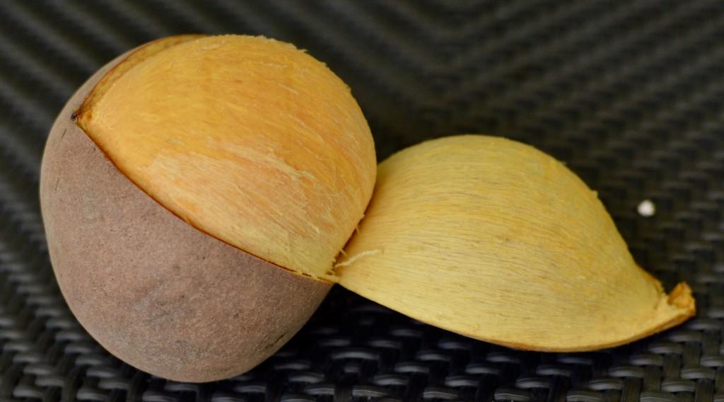 Zabricot (Mammee Apple)