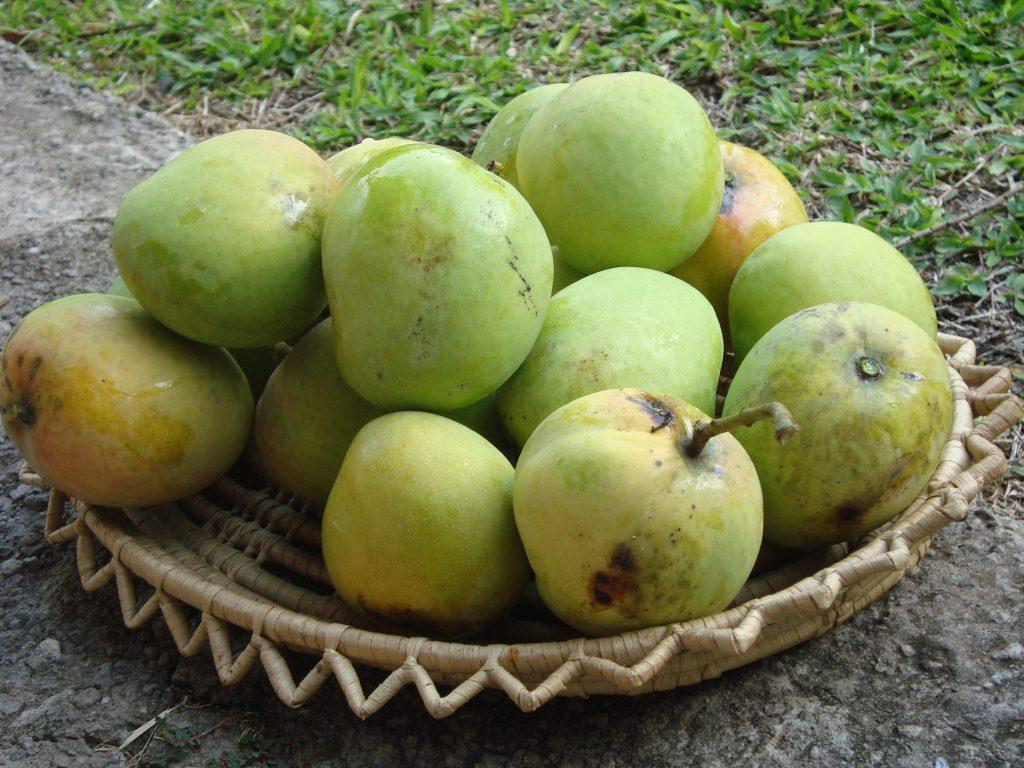 Mango Chutney or Green Mango Odyssey