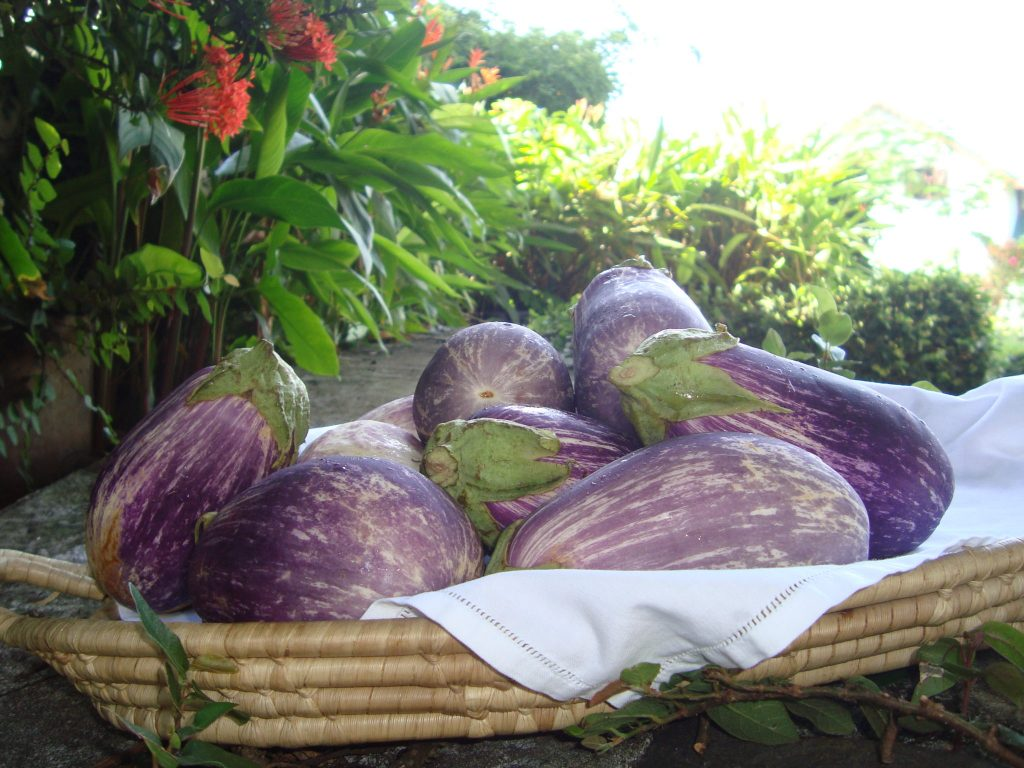 eggplant (melangene)