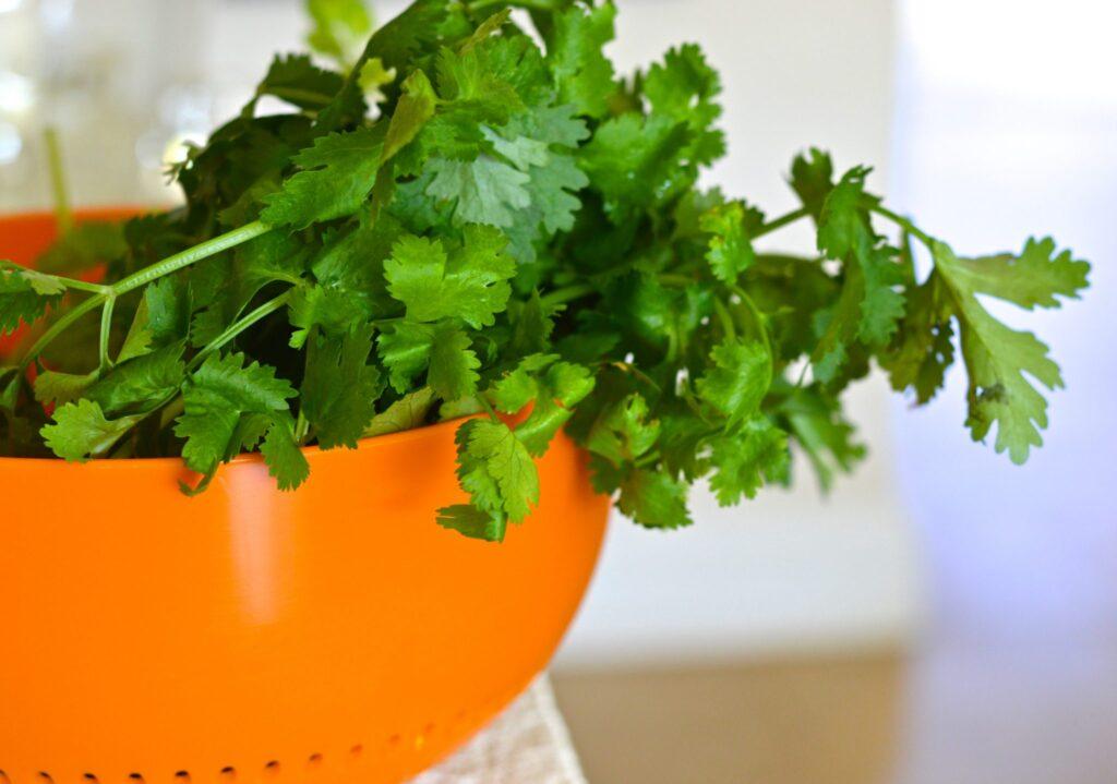 Coriander (cilantro) pesto